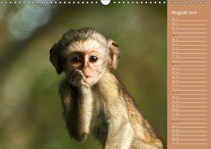 Afrika - Faszinierende Tierwelt