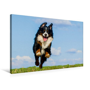 Premium Textil-Leinwand 75 cm x 50 cm quer Berner Sennenhund Mer