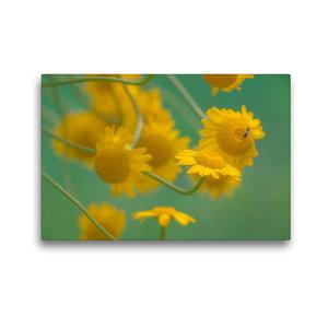 Premium Textil-Leinwand 45 cm x 30 cm quer Gelbe Magerite