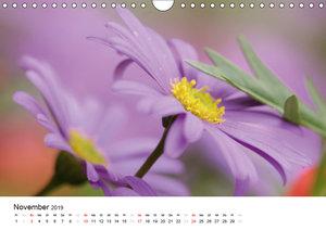 Zarte Natur 2019 (Wandkalender 2019 DIN A4 quer)