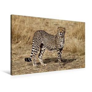 Premium Textil-Leinwand 90 cm x 60 cm quer Gepardin in der Savan