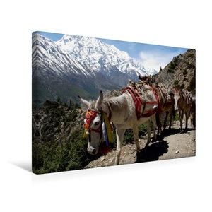 Premium Textil-Leinwand 45 cm x 30 cm quer Pferde sind noch imme