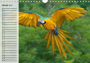 Papageien. Bunt, laut und klug (Wandkalender 2019 DIN A4 quer)