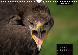 Greifvögel - Herrscher der Lüfte