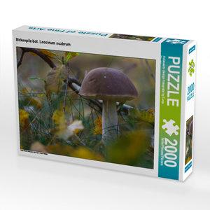 CALVENDO Puzzle Birkenpilz bot. Leccinum scabrum 2000 Teile Lege