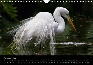 World of Heron