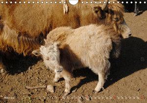 Zauberhafte Mongolei (Wandkalender 2019 DIN A4 quer)