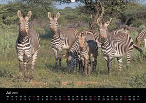 Tierreich Namibia (Wandkalender 2019 DIN A2 quer)