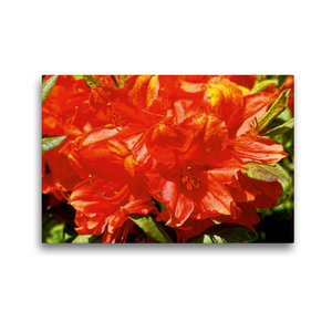 Premium Textil-Leinwand 45 cm x 30 cm quer Rhododendron im Garte