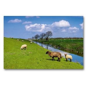 Premium Textil-Leinwand 90 cm x 60 cm quer Deichschafe