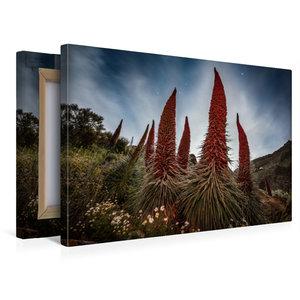 Premium Textil-Leinwand 45 cm x 30 cm quer Tajinaste Pflanzen im