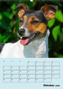 Familienplaner Jack und Parson Russell Terrier
