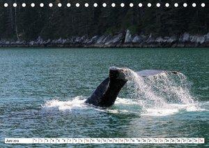 Alaskas Tierwelt - Artenvielfalt im hohen Norden (Tischkalender
