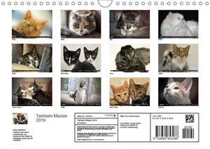 Tierheim - Miezen (Wandkalender 2019 DIN A4 quer)