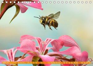Sechs Beine in der Luft - Wildbienen im Flug (Tischkalender 2020