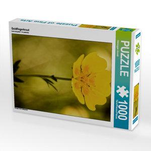 Goldfingerkraut 1000 Teile Puzzle hoch