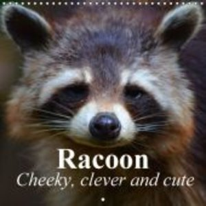 Racoon - Cheeky, clever and cute (Wall Calendar 2015 300 × 300 m
