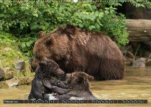 Familie Braunbär - Kräftemessen im kühlen Nass