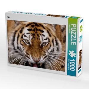 CALVENDO Puzzle Tiger 1000 Teile Lege-Größe 64 x 48 cm Foto-Puzz