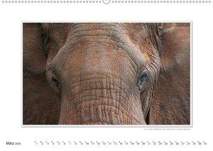 Emotionale Momente: Aus dem Leben der Elefanten. / CH-Version