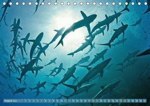 Hai: Raubtier der Meere (Tischkalender 2018 DIN A5 quer)