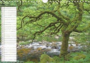 Einsame Natur - Terminkalender (Wandkalender 2020 DIN A4 quer)