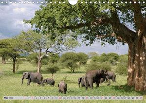 Elefanten. Sensible Rüsseltiere