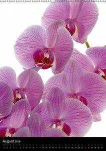 Faszination Orchideen