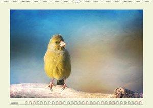 Die sonderbare Welt der lustigen Vögel