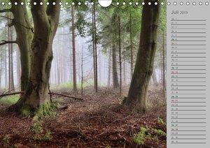 Planungskalender Märchenwald 2019 (Wandkalender 2019 DIN A4 quer