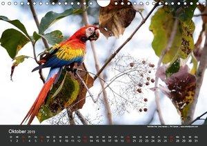 Costa Rica 2019 Exotische Vogelwelt (Wandkalender 2019 DIN A4 qu