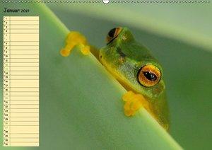 Vorsicht: Froschkönig (Wandkalender 2019 DIN A2 quer)
