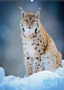 Raubkatzen: Jäger auf leisen Pfoten
