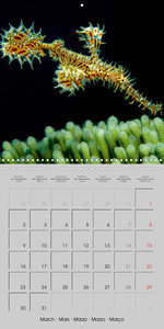 Seahorses and Related Species (Wall Calendar 2020 300 × 300 mm S