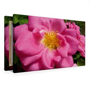 Premium Textil-Leinwand 75 cm x 50 cm quer Marguerite Hilling