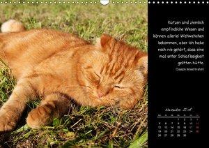 Katzenleben - Zwei Kater schließen Freundschaft fürs Leben