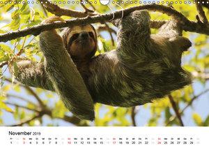 Costa Rica - Die Farben der Natur (Wandkalender 2019 DIN A3 quer