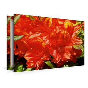 Premium Textil-Leinwand 120 cm x 80 cm quer Rhododendron im Gart