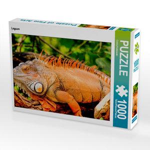 CALVENDO Puzzle Leguan 1000 Teile Lege-Größe 64 x 48 cm Foto-Puz