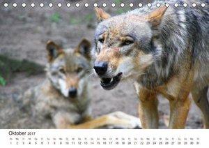Wölfe 2017. Tierische Impressionen (Tischkalender 2017 DIN A5 qu