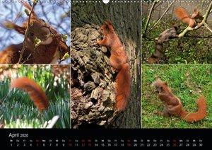 Wilde Eichhörnchenwelt!