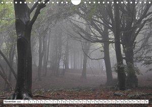 Bäume in Italien (Wandkalender 2020 DIN A4 quer)