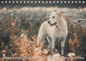 Faszination Labrador - gelb, foxred, schwarz