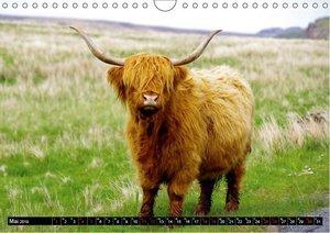 Schottland - Der Norden Großbritanniens (Wandkalender 2019 DIN A