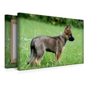 Premium Textil-Leinwand 45 cm x 30 cm quer Deutscher Schäferhund