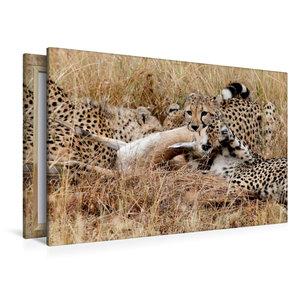 Premium Textil-Leinwand 120 cm x 80 cm quer Geparden mit Beute i