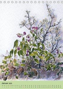Die Flora in Baden-Württemberg (Tischkalender 2020 DIN A5 hoch)
