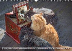 Taffe Begegnungen-Drei Waldkatzen auf Abenteuerreisen (Wandkalen