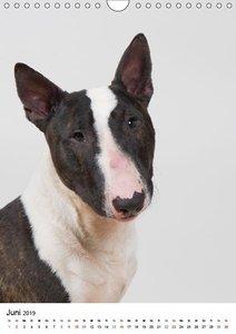 Hunde im Portrait (Wandkalender 2019 DIN A4 hoch)