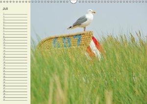 Amrum Geburtstagsmerker (Wandkalender immerwährend DIN A3 quer)